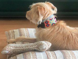 Pachapata, a marca que quer ser a melhor amiga do seu cão